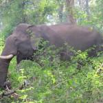 elephanet
